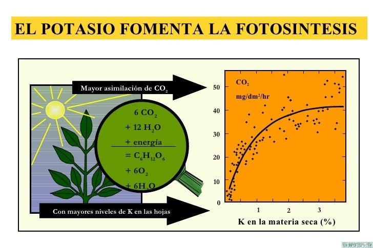 Papel de k en las plantas for Potasio para plantas