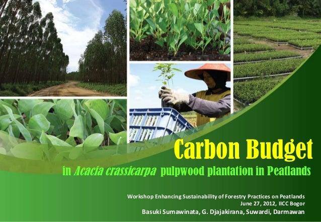Carbon Budgetin Acacia crassicarpa pulpwood plantation in Peatlands              Workshop Enhancing Sustainability of Fore...