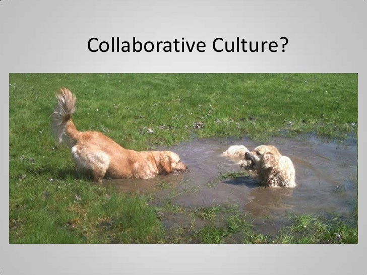 Collaborative Culture?