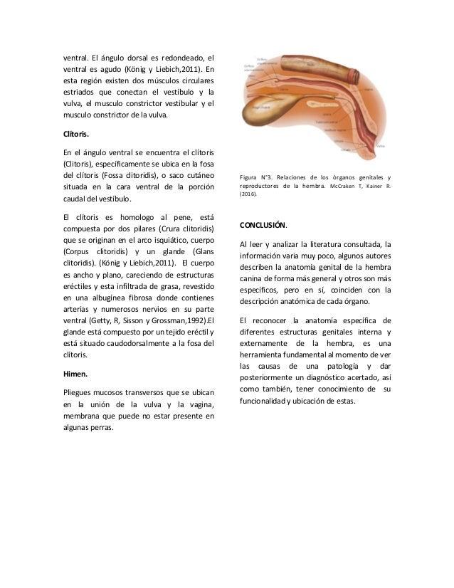 anatomía genital de la hembra
