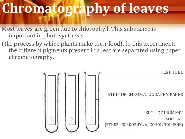 plant pigment chromatography essay Chromatography of plant pigments introduction: chlorophyll often hides the other pigments present in leaves in autumn, chlorophyll breaks down, allowing xanthophyll and carotene, and newly made anthocyanin, to show their colors.