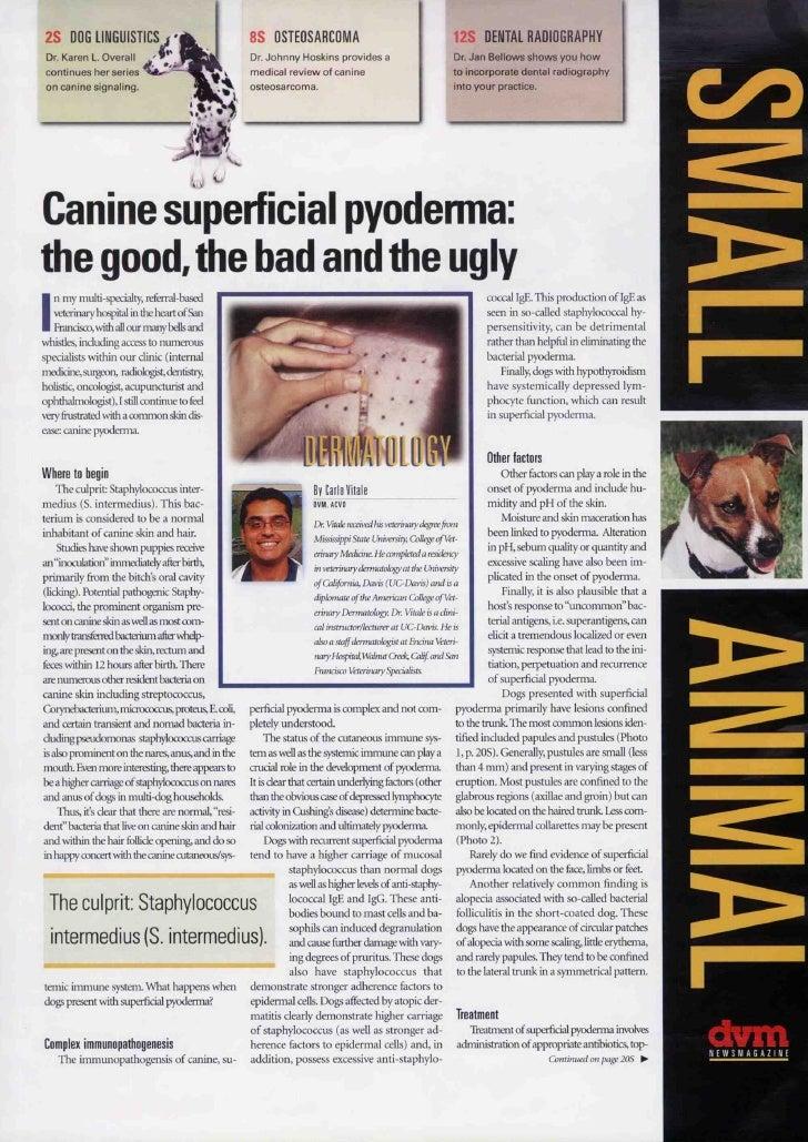 Paper Dermatite Superficial