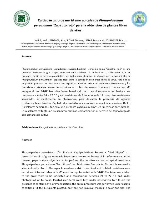 """Cultivo in vitro de meristemo apicales de Phragmipedium peruvianum """"Zapatito rojo"""" para la obtención de plantas libres de ..."""