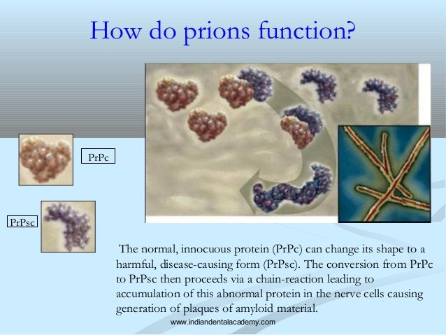 how to treat prion diseases essay Prion diseases infection control recommend on facebook tweet share compartir on this page prion diseases variant creutzfeldt-jakob disease (vcjd) bovine spongiform encephalopathy (bse), or mad cow disease chronic wasting disease (cwd) file formats help.
