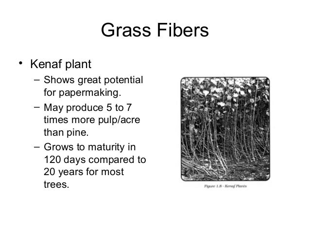 Grass Fibers • Kenaf plant – Shows great potential for papermaking. – May produce 5 to 7 times more pulp/acre than pine. –...