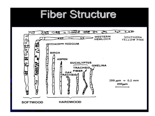 STRUCTURE OF CELLULOSE