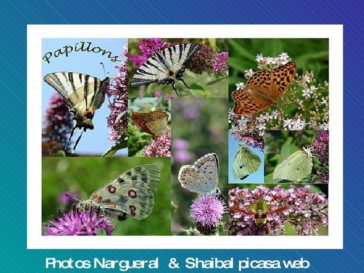 Photos Nargueral  &  Shaibal picasa web albums