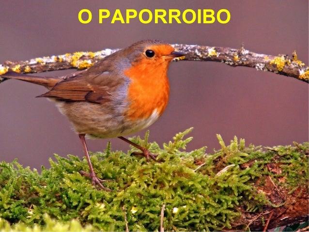 O PAPORROIBO
