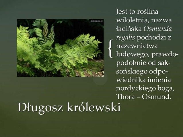 {  Jest to roślina wiloletnia, nazwa łacińska Osmunda regalis pochodzi z nazewnictwa ludowego, prawdopodobnie od saksoński...