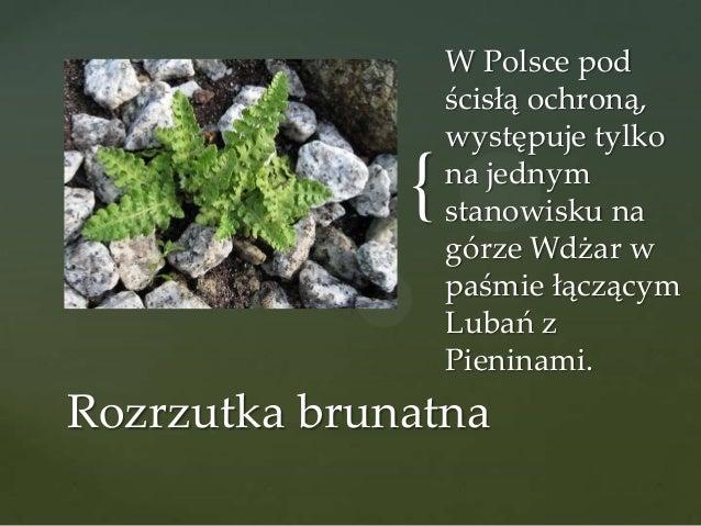 {  W Polsce pod ścisłą ochroną, występuje tylko na jednym stanowisku na górze Wdżar w paśmie łączącym Lubań z Pieninami.  ...
