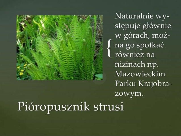 {  Naturalnie występuje głównie w górach, można go spotkać również na nizinach np. Mazowieckim Parku Krajobrazowym.  Pióro...