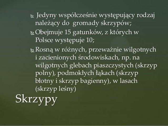 Jedyny współcześnie występujący rodzaj należący do gromady skrzypów;  Obejmuje 15 gatunków, z których w Polsce występuje ...