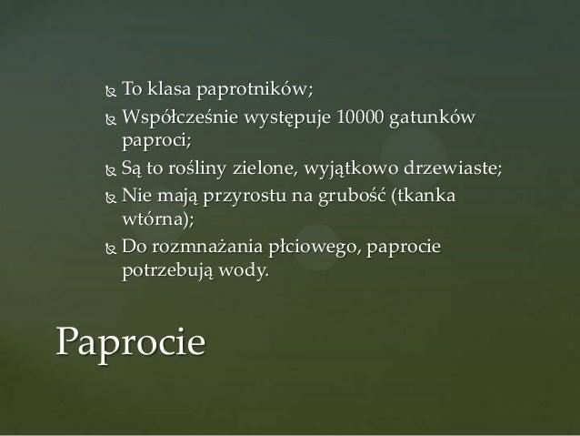 To klasa paprotników;  Współcześnie występuje 10000 gatunków paproci;  Są to rośliny zielone, wyjątkowo drzewiaste;  Ni...