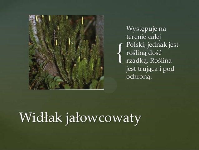 {  Występuje na terenie całej Polski, jednak jest rośliną dość rzadką. Roślina jest trująca i pod ochroną.  Widłak jałowco...