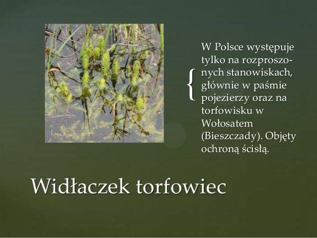 {  W Polsce występuje tylko na rozproszonych stanowiskach, głównie w paśmie pojezierzy oraz na torfowisku w Wołosatem (Bie...