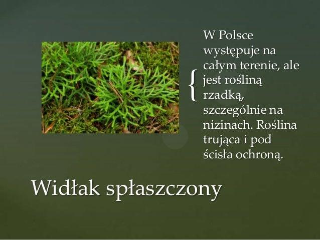 {  W Polsce występuje na całym terenie, ale jest rośliną rzadką, szczególnie na nizinach. Roślina trująca i pod ścisła och...