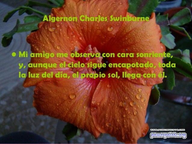 Algernon Charles Swinburne• Mi amigo me observa con cara sonriente,  y, aunque el cielo sigue encapotado, toda  la luz del...