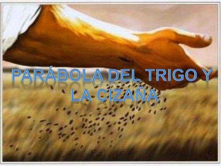 Parábola del trigo y<br /> la cizaña<br />