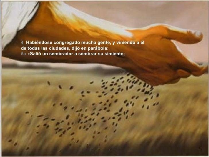 4   Habiéndose congregado mucha gente, y viniendo a él de todas las ciudades, dijo en parábola: 5a   «Salió un sembrador a...