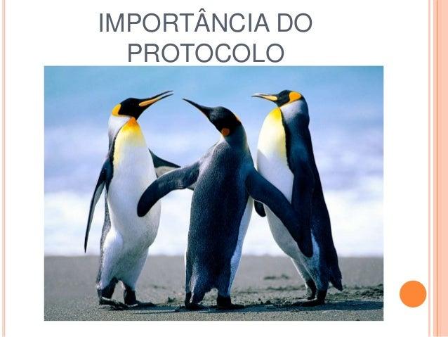 IMPORTÂNCIA DO PROTOCOLO