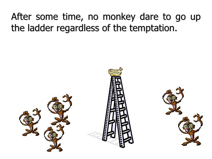 After some time, no monkey dare to go up the ladder regardless of the temptation.
