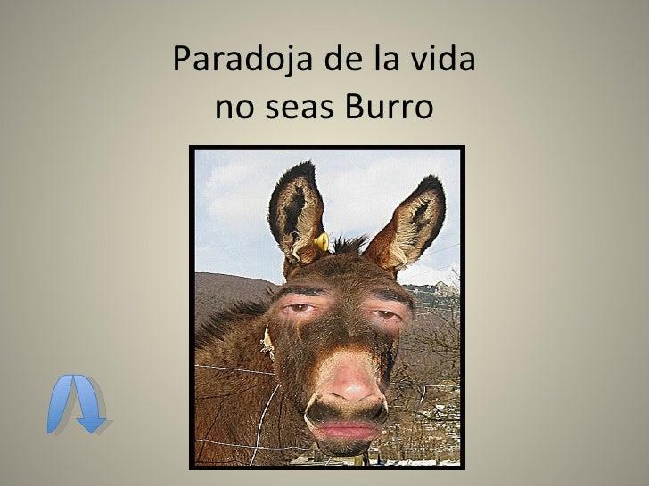Paradoja de la vida no seas Burro No seas Burro