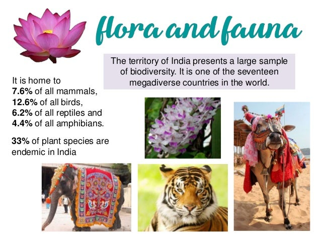 why the flora and fauna of Answer: india has rich heritage of flora and fauna because of the following factors (a) it has a very large geographical area which includes the mountains, the northern plains, plateaus and also islands.