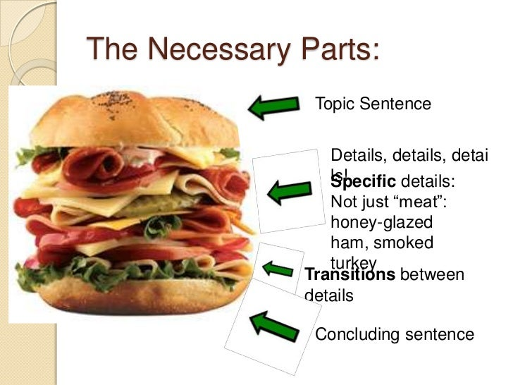 Digestion of a ham sandwich essay