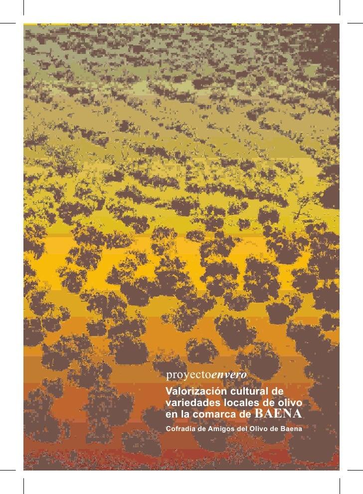 Paraiso De Olivos Catalogo