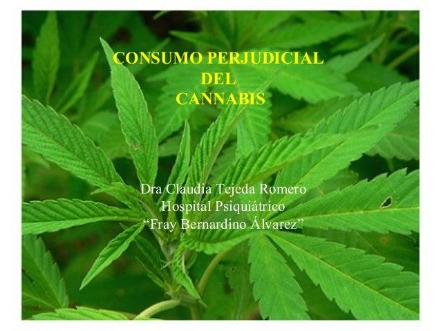 "CONSUMO PERJUDICIAL DEL CANNABIS Dra Claudia Tejeda Romero Hospital Psiquiátrico ""Fray Bernardino Álvarez"""
