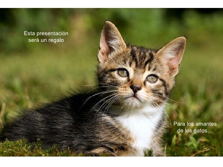 Para los amantes de los gatos… Esta presentación será un regalo