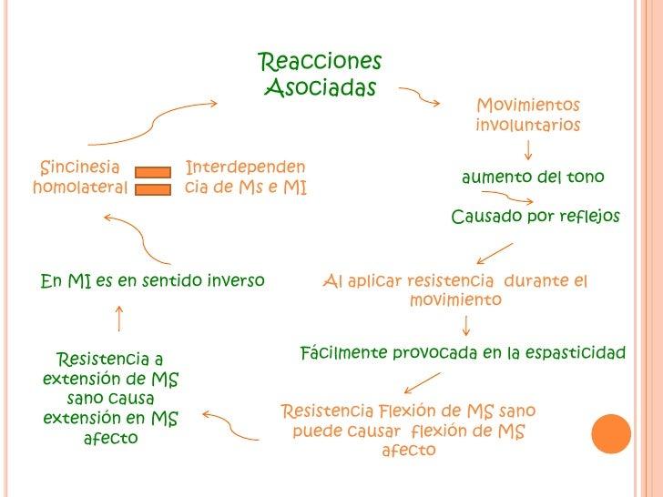 Sinergias Básicas de los miembros<br />Movimiento estereotipado debido a  la contracción de un grupo  muscular <br />Siner...