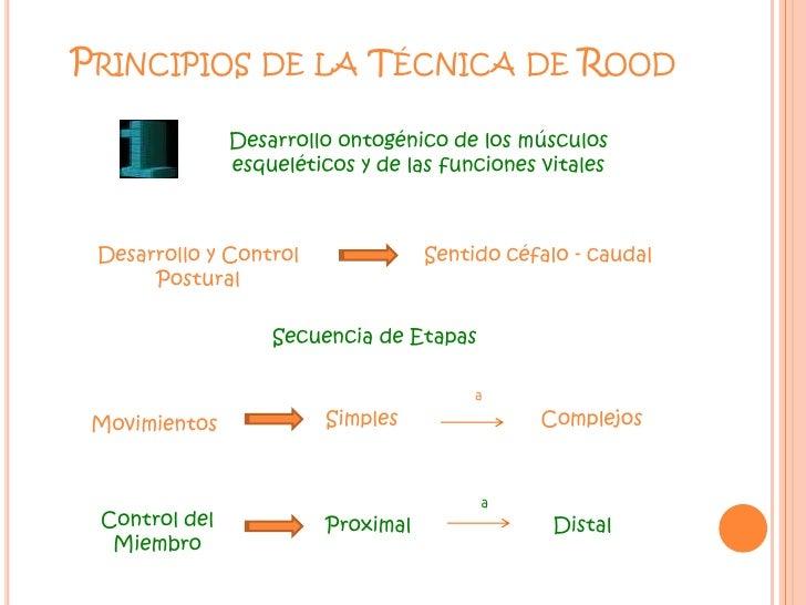 Principios de la Técnica de Rood<br />Desarrollo ontogénico de los músculos esqueléticos y de las funciones vitales<br />D...