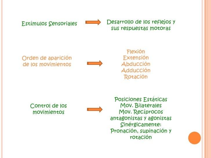 Desarrollo de los reflejos y sus respuestas motoras<br />Estímulos Sensoriales<br />Flexión<br />Extensión<br />Abducción<...