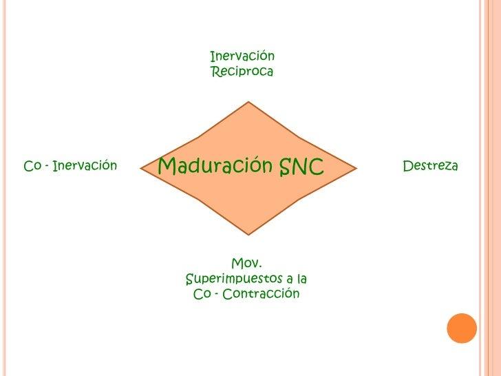 Inervación <br />Reciproca<br />Maduración SNC<br />Co - Inervación<br />Destreza<br />Mov. Superimpuestos a la Co - Contr...