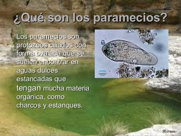 Q Son Los Lemures Paramecios