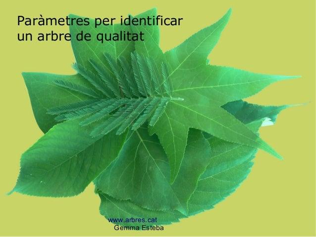 www.arbres.cat Gemma Esteba Paràmetres per identificar un arbre de qualitat