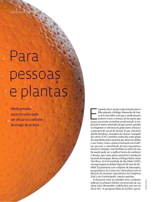 microbiologiay  Para pessoas e plantas expectorante pode ser eficaz no controle de praga da laranja  E  nquanto dava xaro...