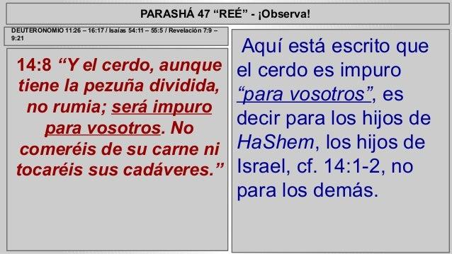 """PARASHÁ 47 """"REÉ"""" - ¡Observa!  14:8 """"Y el cerdo, aunque  tiene la pezuña dividida,  no rumia; será impuro  para vosotros. N..."""
