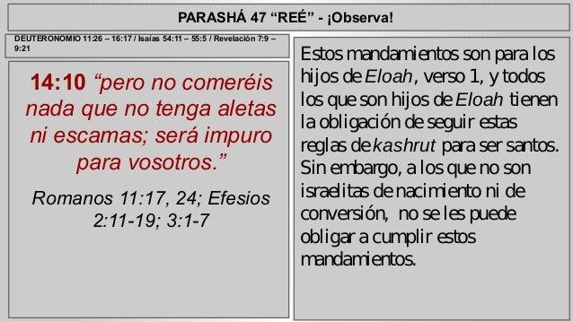 """PARASHÁ 47 """"REÉ"""" - ¡Observa!  14:10 """"pero no comeréis  nada que no tenga aletas  ni escamas; será impuro  para vosotros."""" ..."""
