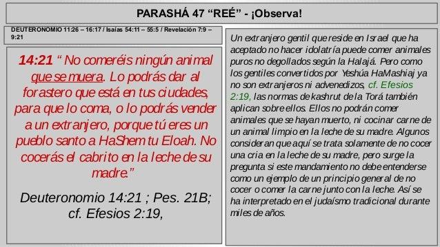 """PARASHÁ 47 """"REÉ"""" - ¡Observa!  14:21 """" No comeréis ningún animal  que se muera. Lo podrás dar al  forastero que está en tus..."""