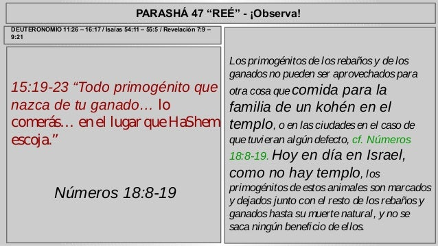 "PARASHÁ 47 ""REÉ"" - ¡Observa!  15:19-23 ""Todo primogénito que  nazca de tu ganado… lo  comerás… en el lugar que HaShem  esc..."