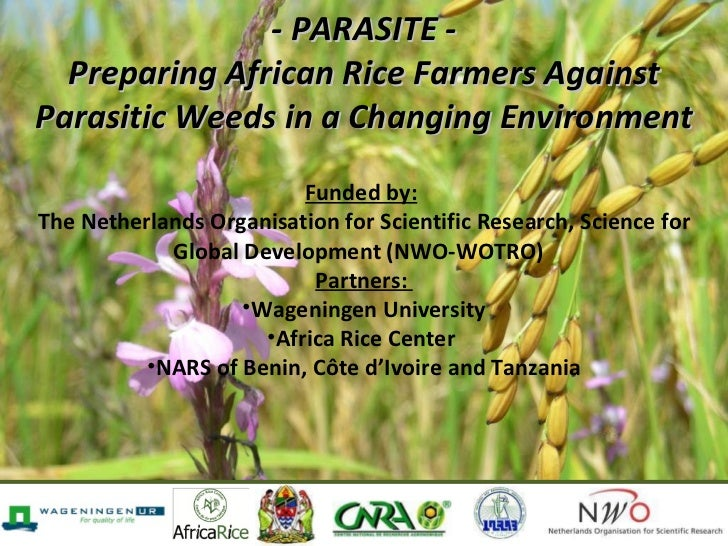 - PARASITE - Preparing African Rice Farmers Against Parasitic Weeds in a Changing Environment   <ul><li>Funded by:   </li>...
