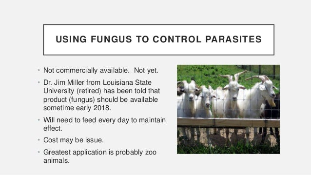 Parasites in Goats