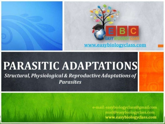 For detailed description of this topic, please click on: http://www.easybiologyclass.com/parasitic-adaptations-platyhelmin...