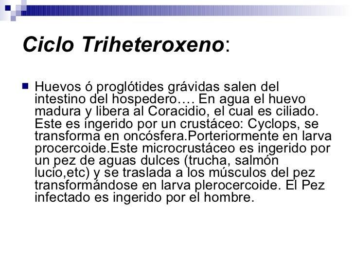 Ciclo Triheteroxeno : <ul><li>Huevos ó proglótides grávidas salen del intestino del hospedero…. En agua el huevo madura y ...