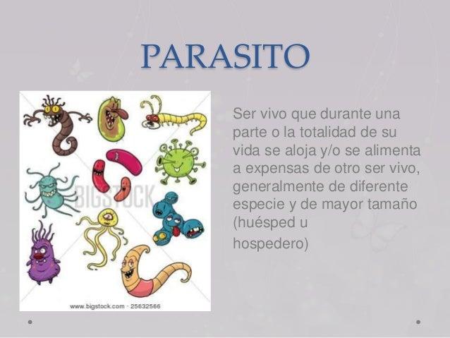 Los insectos y los parásitos de la persona