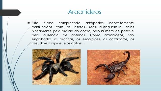 Aracnídeos  Esta classe compreende artrópodes incorretamente confundidos com os insetos. Mas distinguem-se deles nitidame...
