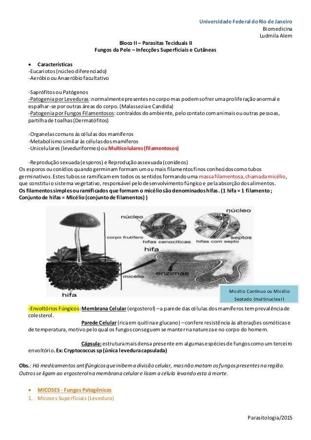 Universidade Federal doRio de Janeiro Biomedicina LudmilaAlem Parasitologia/2015 Bloco II – Parasitas Teciduais II Fungos ...