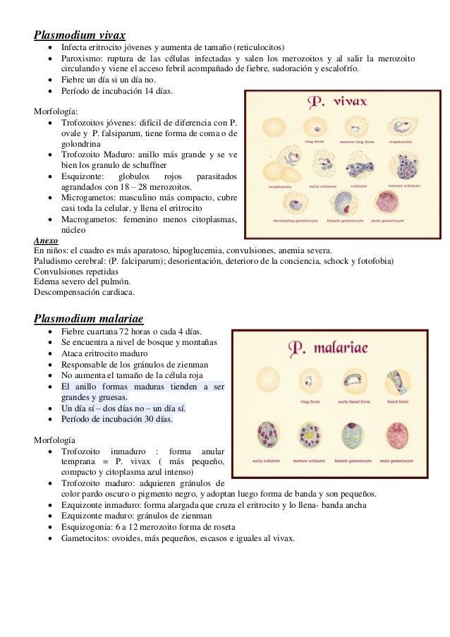 calculos renales acido urico+tratamiento tratamiento para crisis aguda de gota acido urico vinagre de manzana
